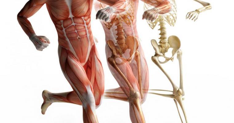 Biomeccanica del corpo umano