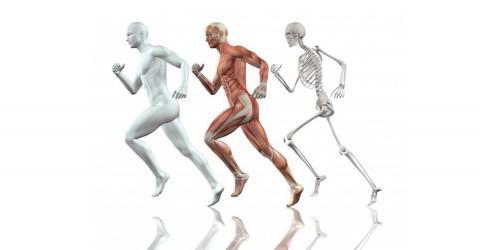 La fascia muscolare, un tessuto connettivo dalla straordinaria potenza.